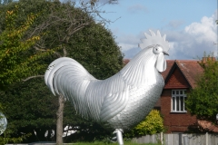 Dorking Cockerel