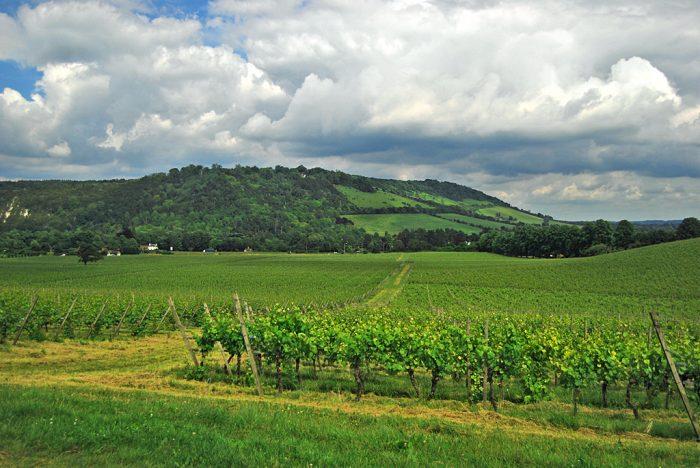 Mole Valley Countryside